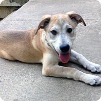 Adopt A Pet :: BELVEDERE - CHAMPAIGN, IL