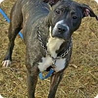 Adopt A Pet :: Veronica - Tipp City, OH