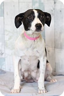 Jack Russell Terrier Mix Dog for adoption in Waldorf, Maryland - Momma