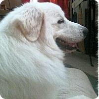 Adopt A Pet :: Boomer - Ball Ground, GA