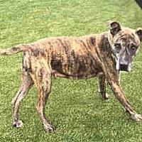 Adopt A Pet :: MADELINE - Waco, TX