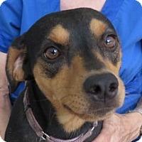 Adopt A Pet :: Catherine! ~ Congenial! - St Petersburg, FL