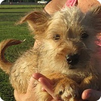 Adopt A Pet :: Willow - Greenville, RI