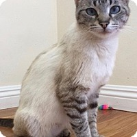 Adopt A Pet :: Cannelloni - Los Angeles, CA