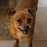 Adopt A Pet :: Poncho - New palestine, IN