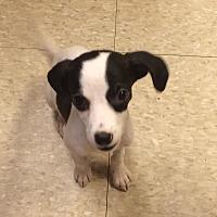 Adopt A Pet :: Reagan - Fair Oaks Ranch, TX