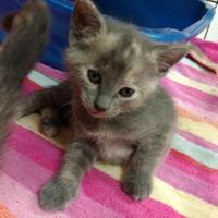 Adopt A Pet :: Hadley - Decatur, IL