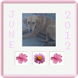 Hound (Unknown Type) Mix Dog for adoption in Parsippany, New Jersey - June