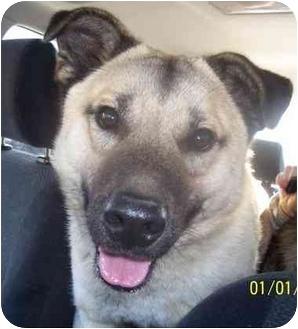 Keeshond Mix Dog for adoption in Blacksburg, Virginia - Bandit