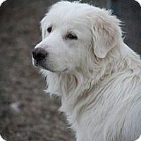 Adopt A Pet :: Libby - Cambridge, IL