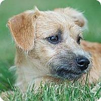 Adopt A Pet :: JIGGS - Providence, RI