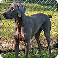 Adopt A Pet :: Scout *ADOPTION PENDING* - Eustis, FL