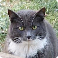 Adopt A Pet :: Handsom boy - Oxford, CT