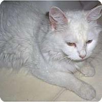 Adopt A Pet :: Livy - Richmond, VA