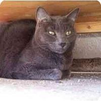 Adopt A Pet :: Gracie Girl - El Cajon, CA