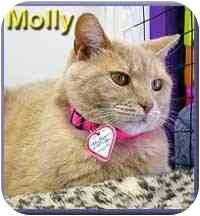 Domestic Shorthair Cat for adoption in Aldie, Virginia - Molly