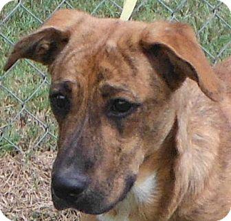 Whippet/Collie Mix Puppy for adoption in Cedartown, Georgia - 29601609
