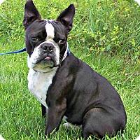 Adopt A Pet :: Oreo Romeo - Greensboro, NC