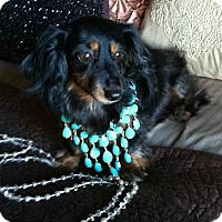 Adopt A Pet :: Lovely Lady - Forest Ranch, CA