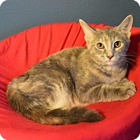 Adopt A Pet :: Millie - Sterling Heights, MI