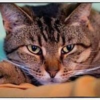 Adopt A Pet :: Bubba - Freeport, NY