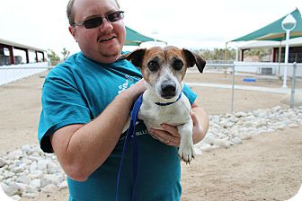 Jack Russell Terrier Mix Dog for adoption in Yucca Valley, California - Jackie Jumpin Flash