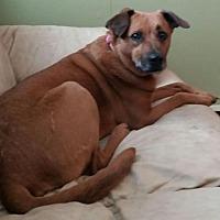 Adopt A Pet :: Casey - Gerrardstown, WV