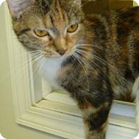 Adopt A Pet :: Minerva - Hamburg, NY