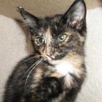 Adopt A Pet :: Ivy - Lacon, IL