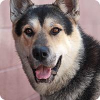 Adopt A Pet :: Prince von Preist - Los Angeles, CA
