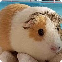 Adopt A Pet :: *Urgent* Jipsey - Fullerton, CA
