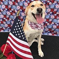 Adopt A Pet :: Maggie - Houston, TX