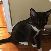 Adopt A Pet :: Oscar Montevecchio - Chicago, IL