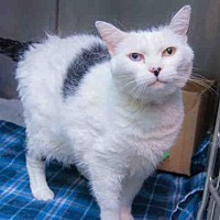 Adopt A Pet :: ADALADE - West Valley, UT