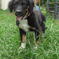 Adopt A Pet :: Wonka - Hartford, CT