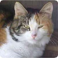 Adopt A Pet :: Calita - Lunenburg, MA