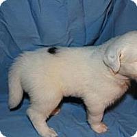 Adopt A Pet :: Boo - Stilwell, OK