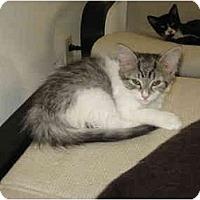 Adopt A Pet :: Seven - Davis, CA