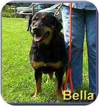 Rottweiler Mix Dog for adoption in Aldie, Virginia - Bella