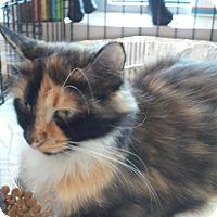 Adopt A Pet :: Patsy - Woodstock, GA