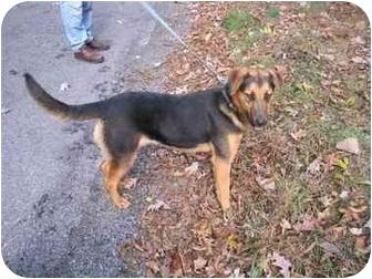 German Shepherd Dog Mix Dog for adoption in Huntingdon, Pennsylvania - Tia