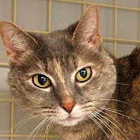 Adopt A Pet :: Misty - Durham, NC