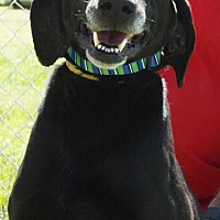 Adopt A Pet :: Black Jack - Grayson, LA