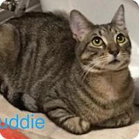 Adopt A Pet :: Buddie - Hamilton, ON