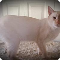 Adopt A Pet :: Lucky - Fairborn, OH