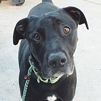 Adopt A Pet :: Kiko - Minneapolis, MN