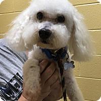 Adopt A Pet :: Marley - Kennesaw, GA