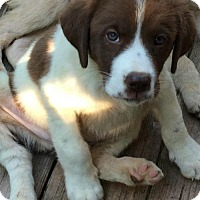Adopt A Pet :: Cannon - Hartford, CT