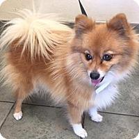 Adopt A Pet :: A443205 - San Antonio, TX