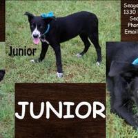Adopt A Pet :: Junior - SEAGOVILLE, TX